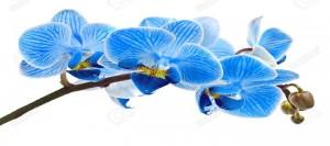 La crema Orchidee imperiale di Guerlain, prezzo e inci